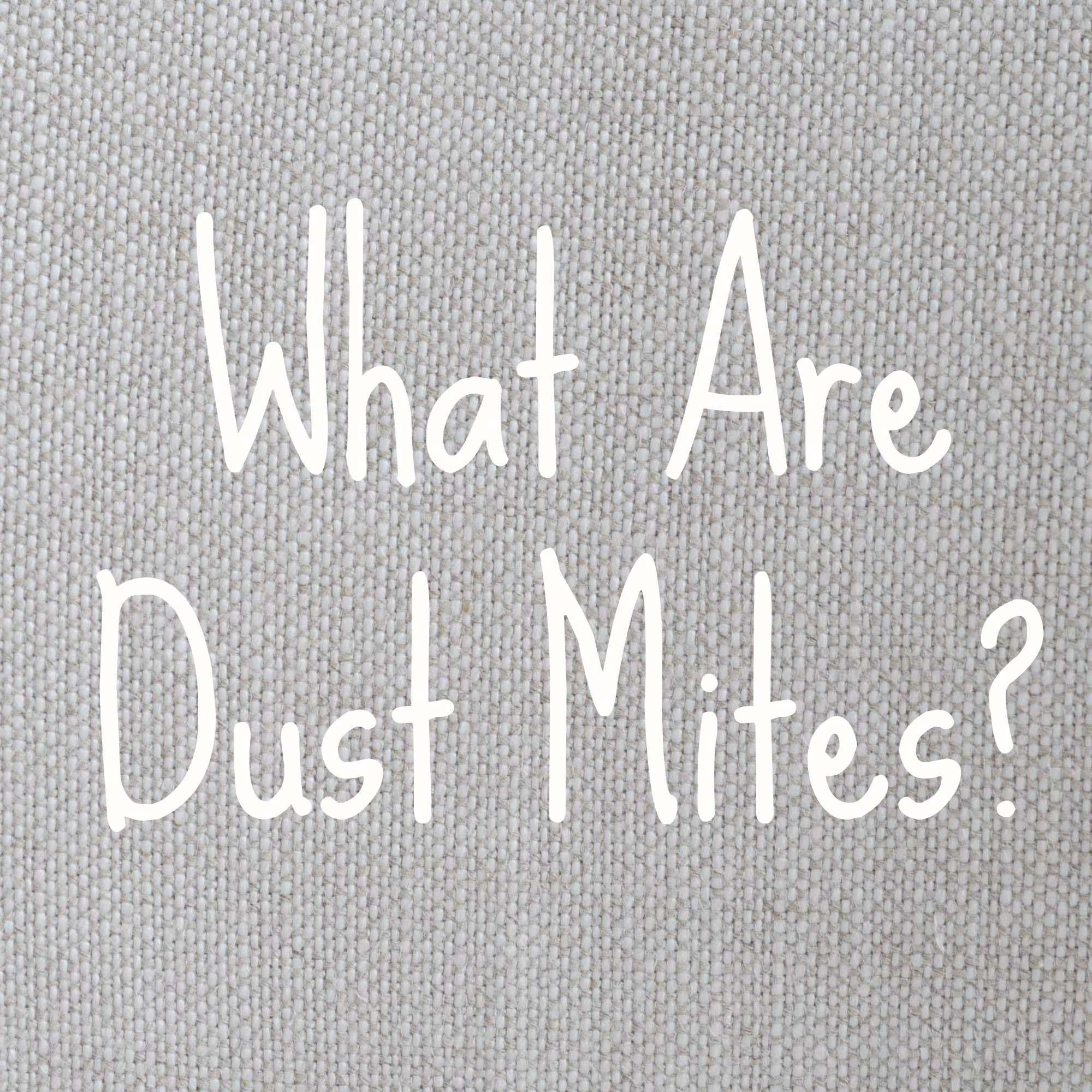 What are dust mites